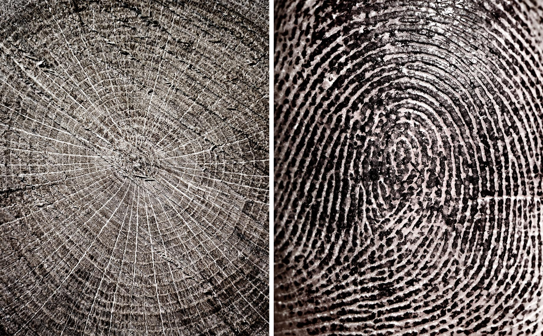 wood-fingerprint.jpg